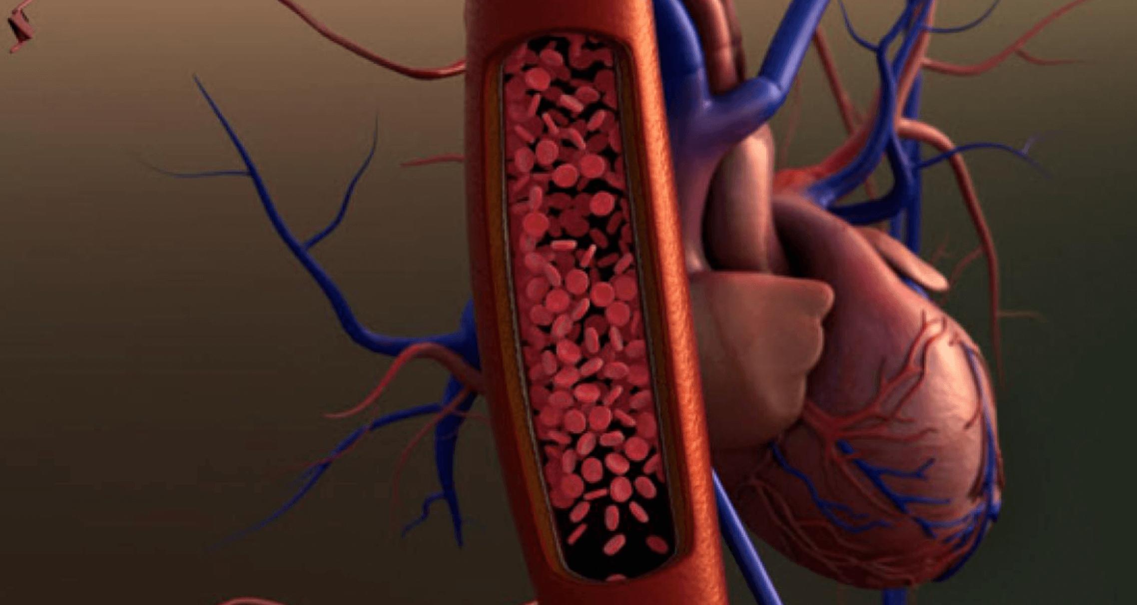 심장-혈액순환-개선