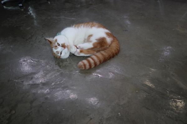 사랑에빠진고양이