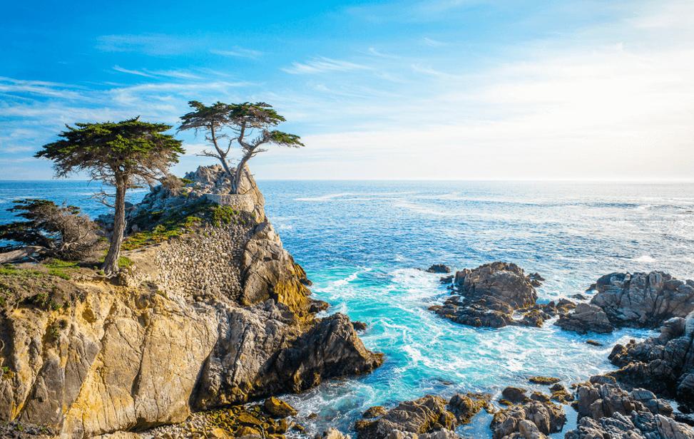 바다에-있는-소나무-모습