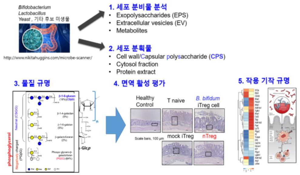 이뮤노바이옴 작용 기전 규명 시스템