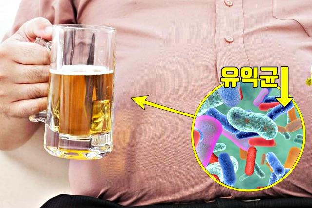 맥주 술 마시면, 조금만 먹어도 배가 불러요, 배가 빵빵한 이유, 조금 먹어도 배부른 증상, 건강 팁줌 매일꿀정보