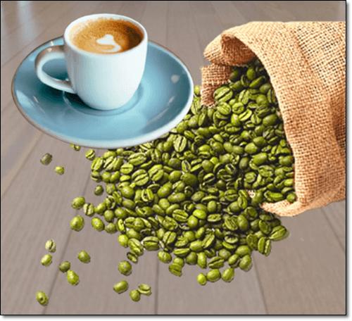커피콩에 풍부한 클로로겐산