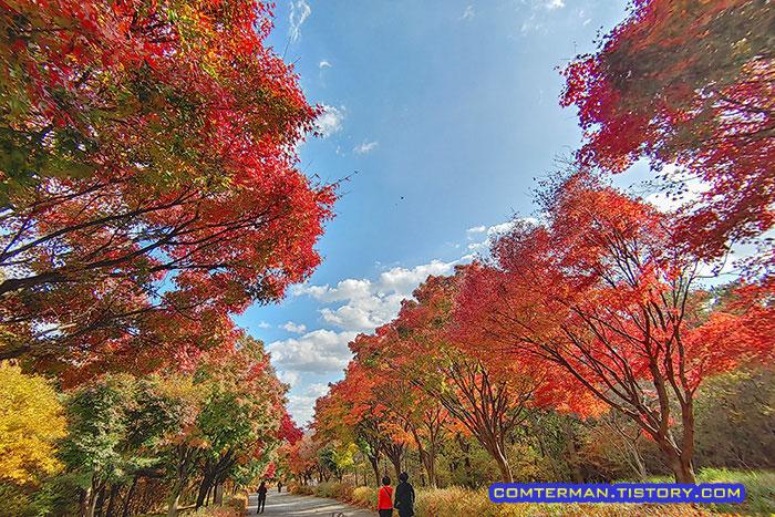 천안 독립기념관 단풍나무 숲길