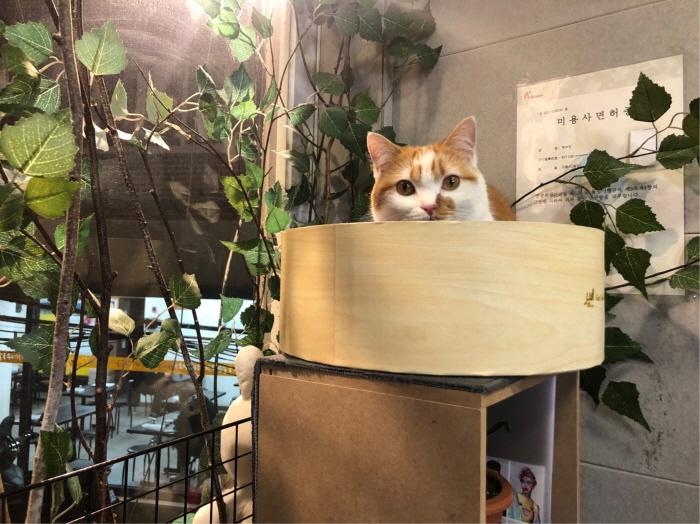 고양이스크래처