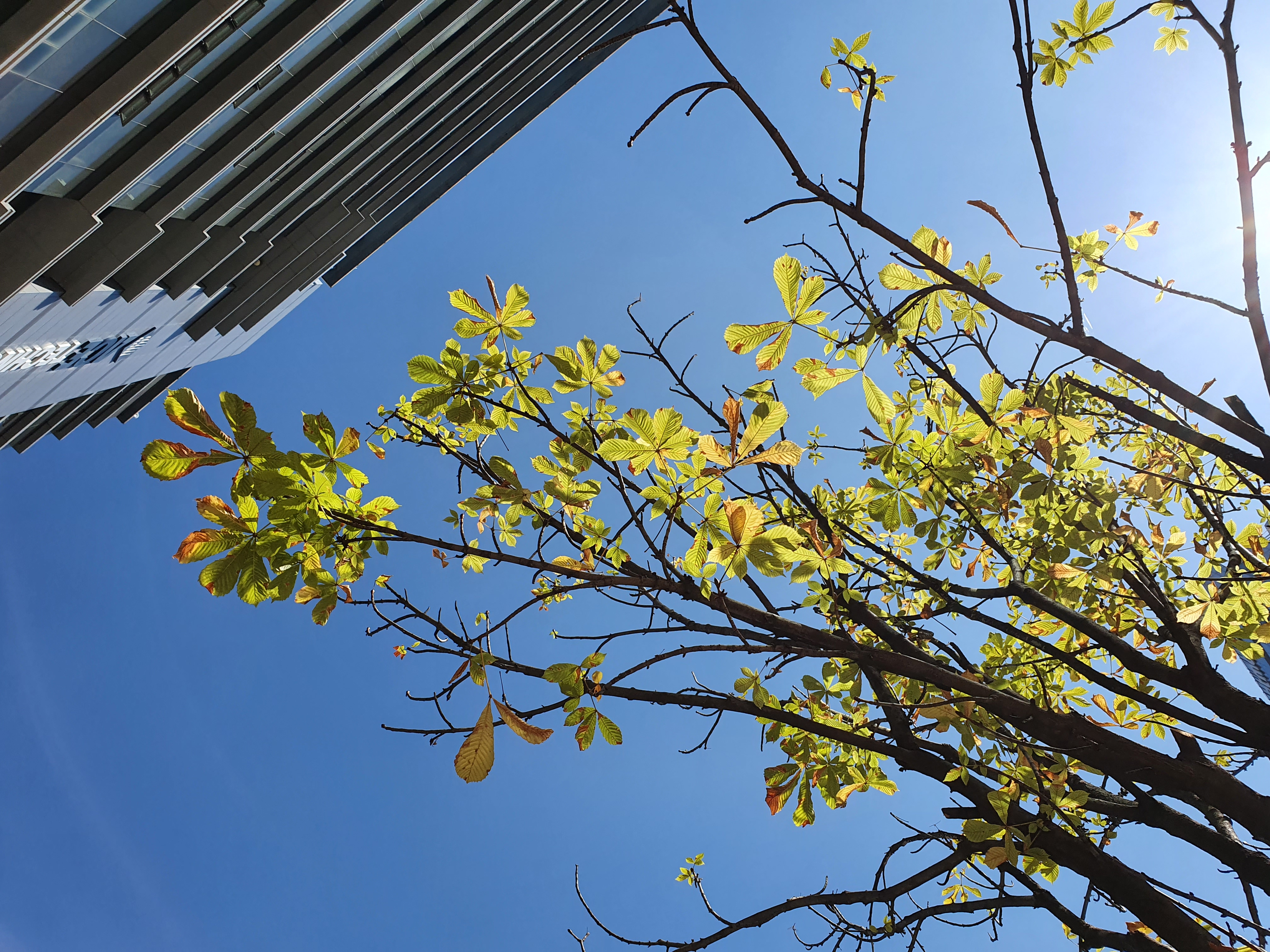 가을 나무와 하늘