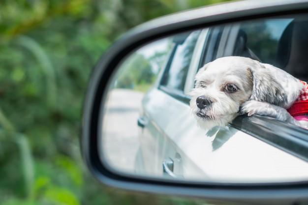 강아지 차 멀미 예방법과 대처법 (+ 증상 드라이브 휴식 간격 간식)