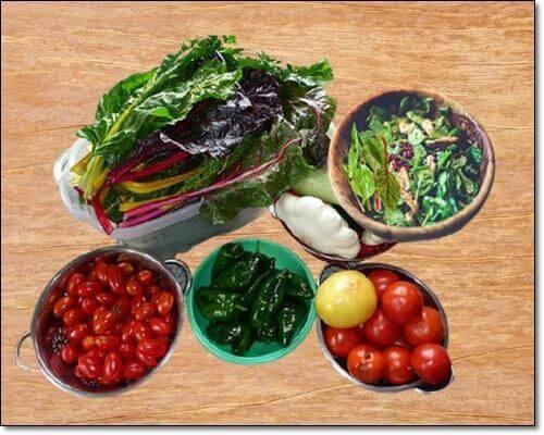 적근대와 채소