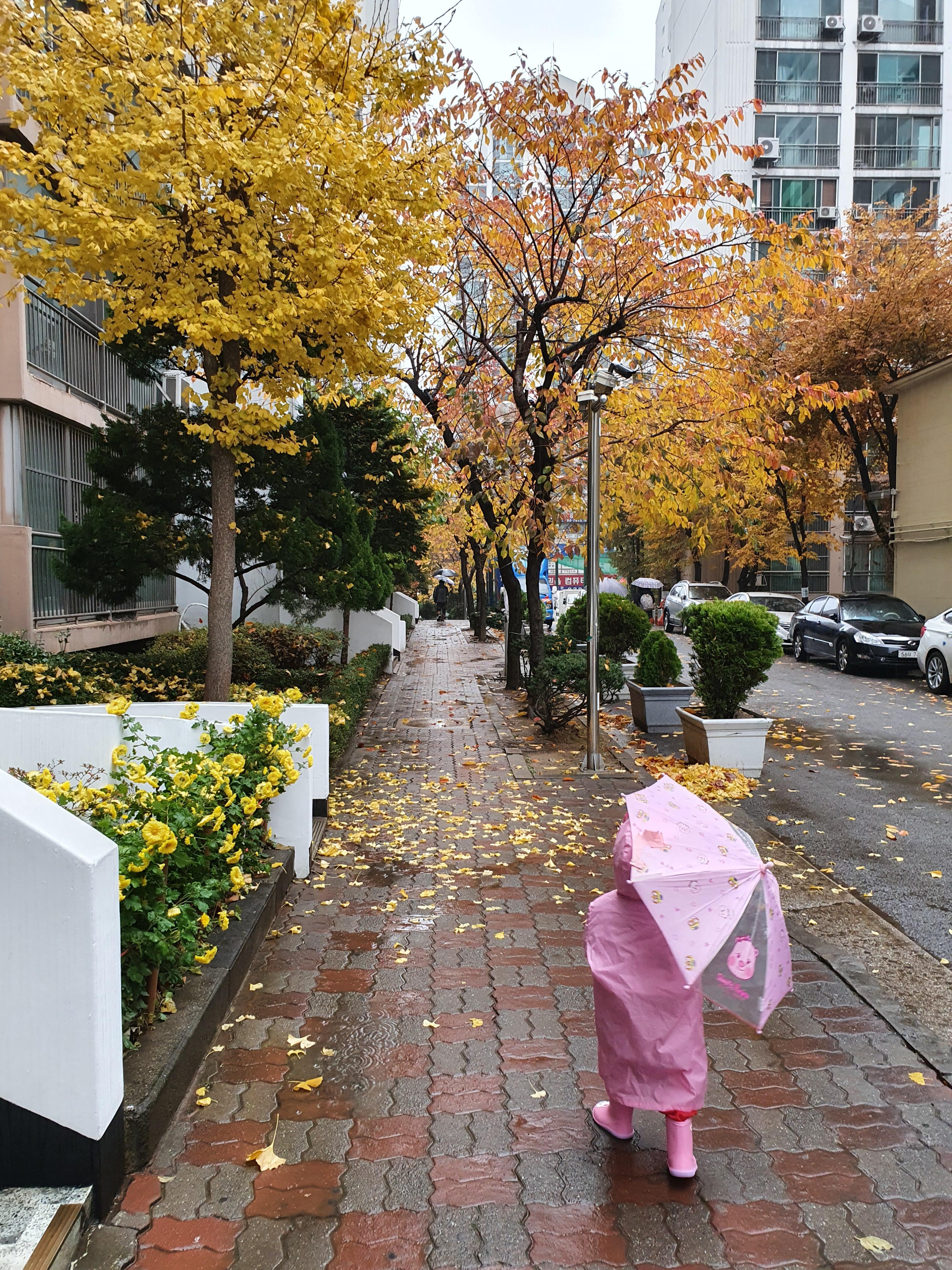 겨울을 재촉하는, 가을비가 왔다