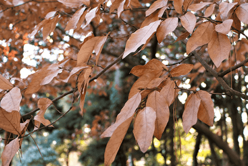 감태나무03