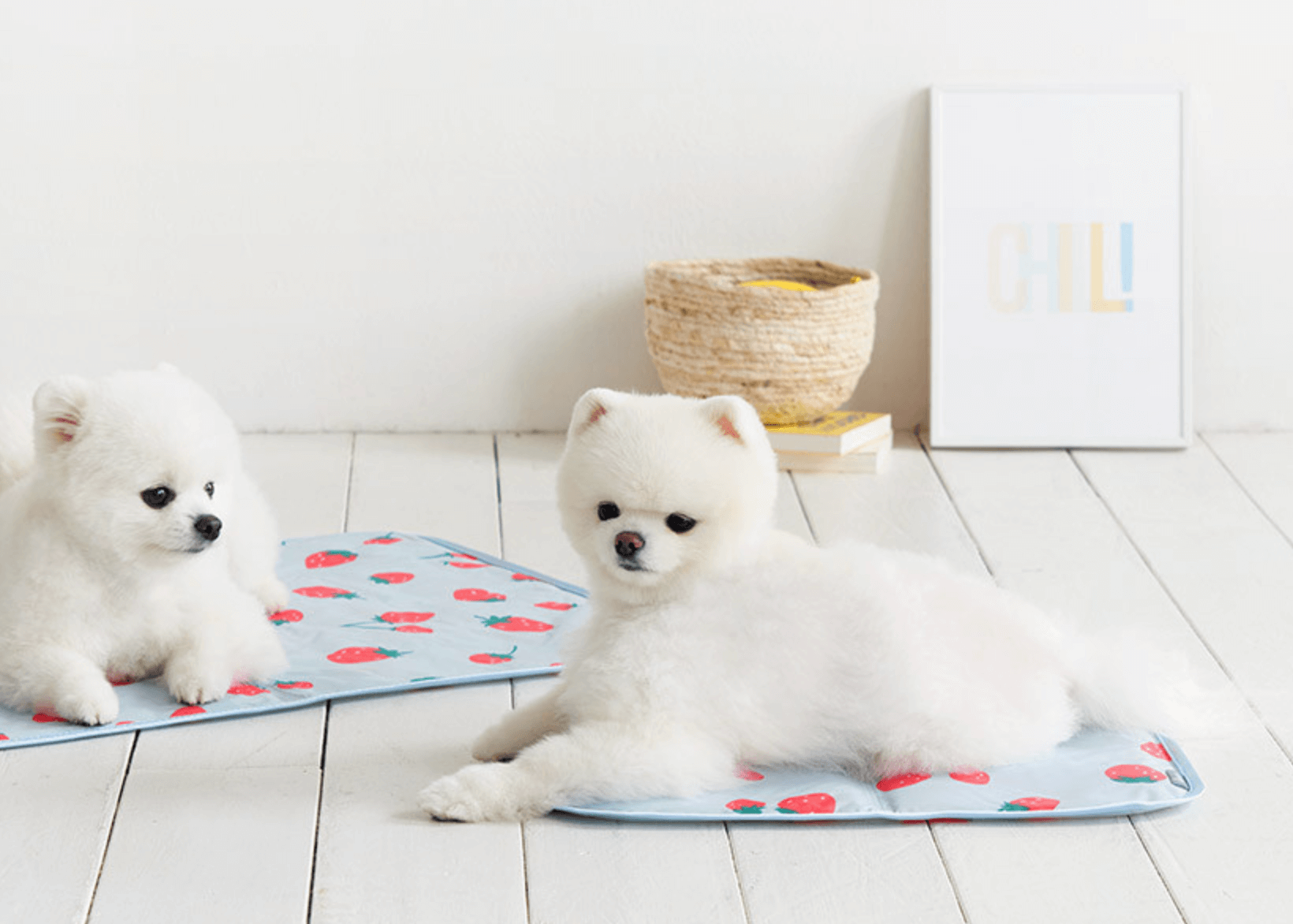 여름-강아지-방석-추천