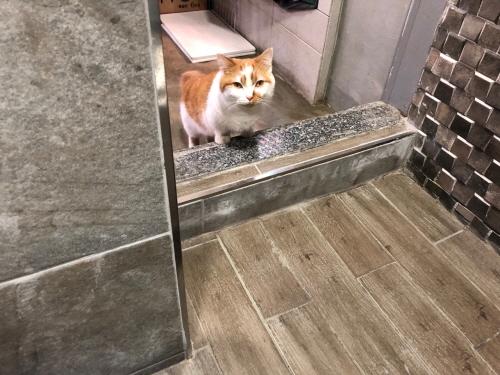 고양이가화장실을따라오는