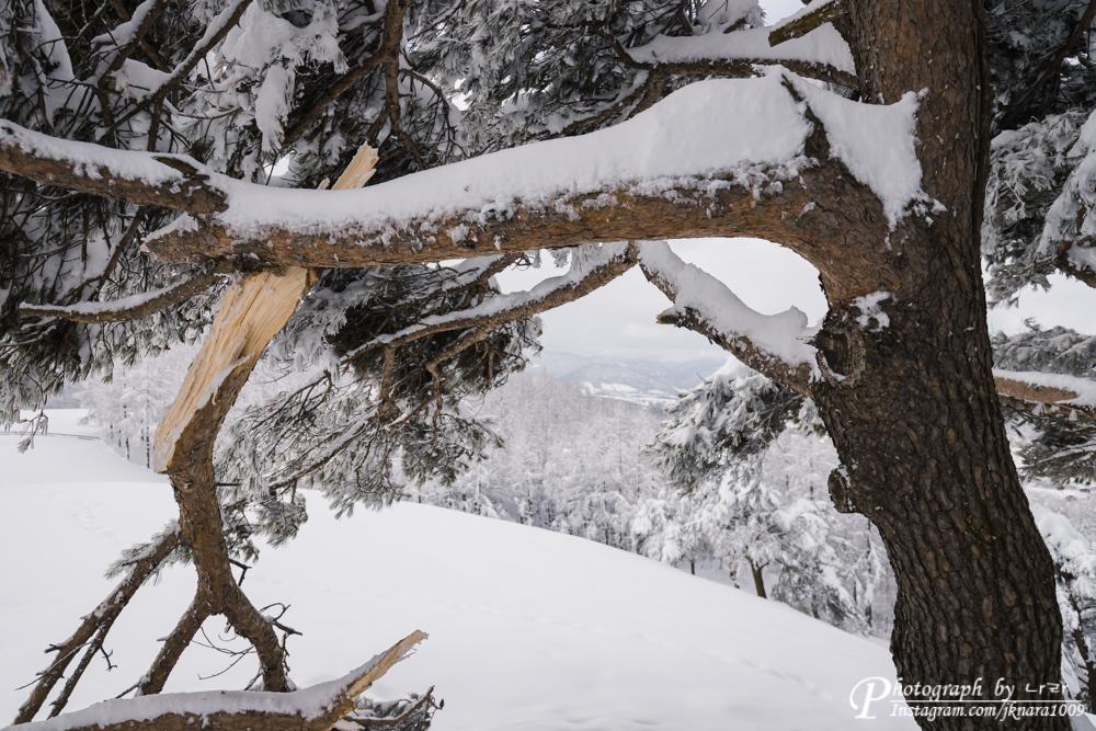 부러진 나무