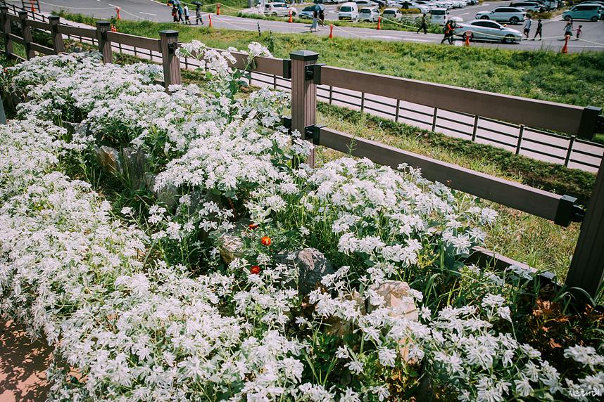 여름 들꽃