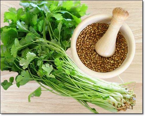 고수씨앗이 건강에 좋은 이유