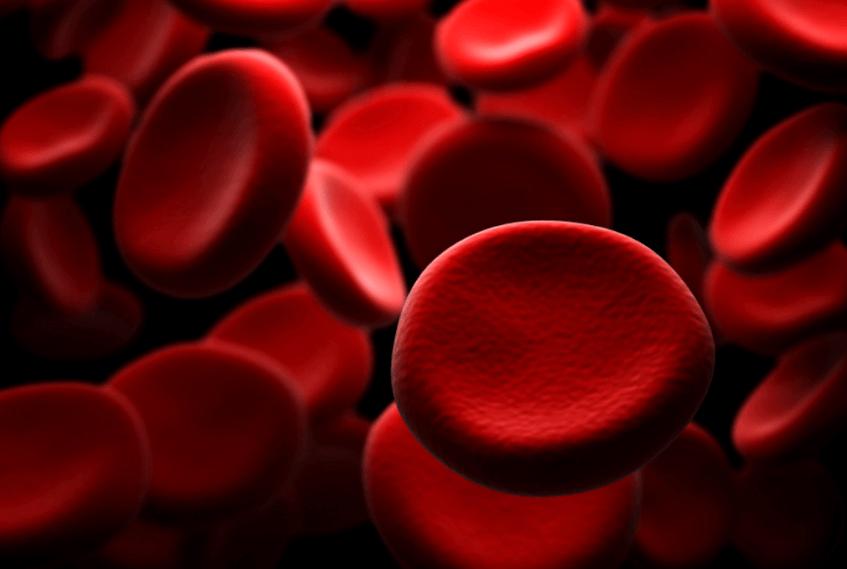 혈관에-흐르는-피