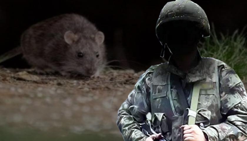 육군 일병 제초 작업 후 사망…한타 바이러스 감염
