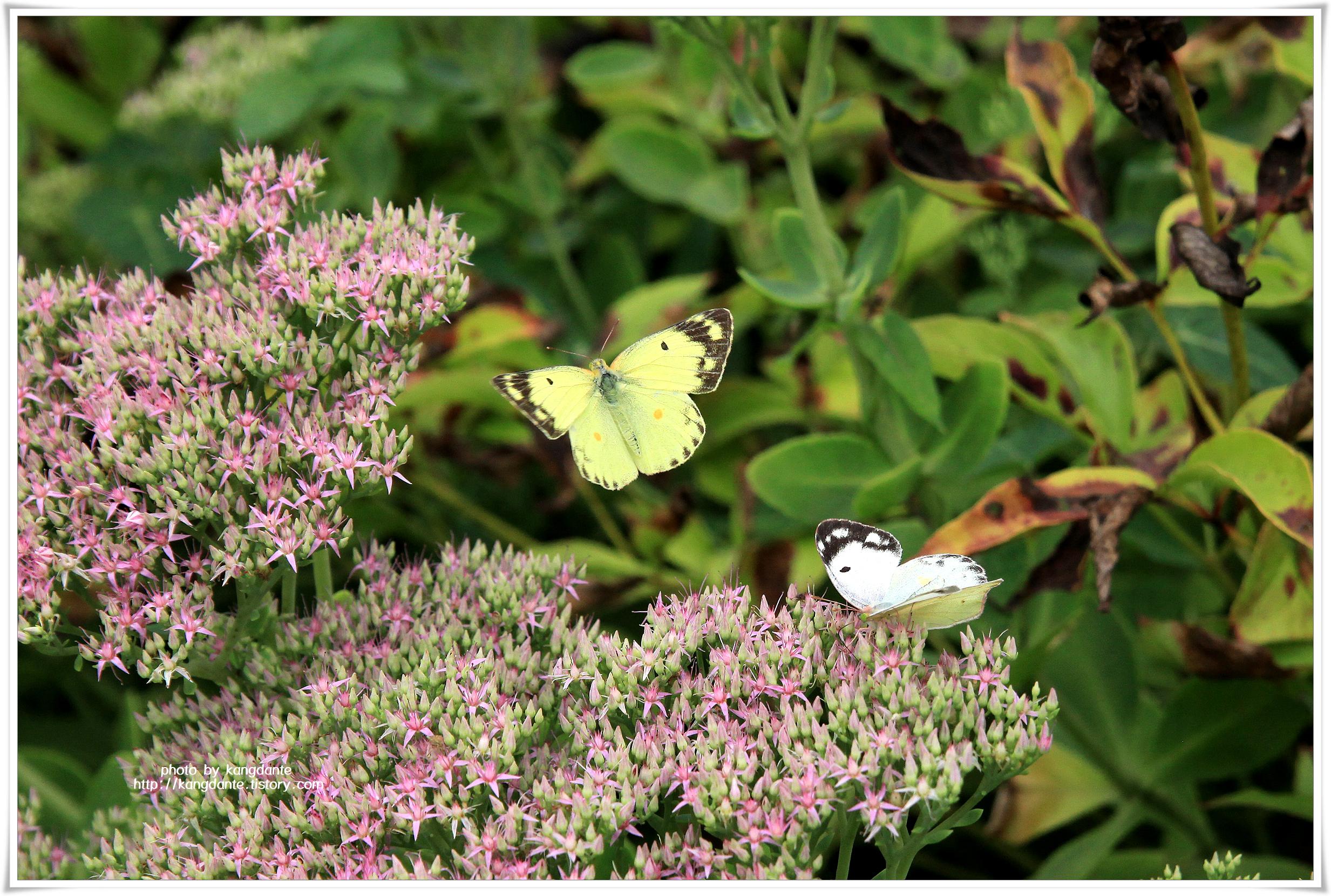 인천대공원 향기정원의 다양한 나비 천국