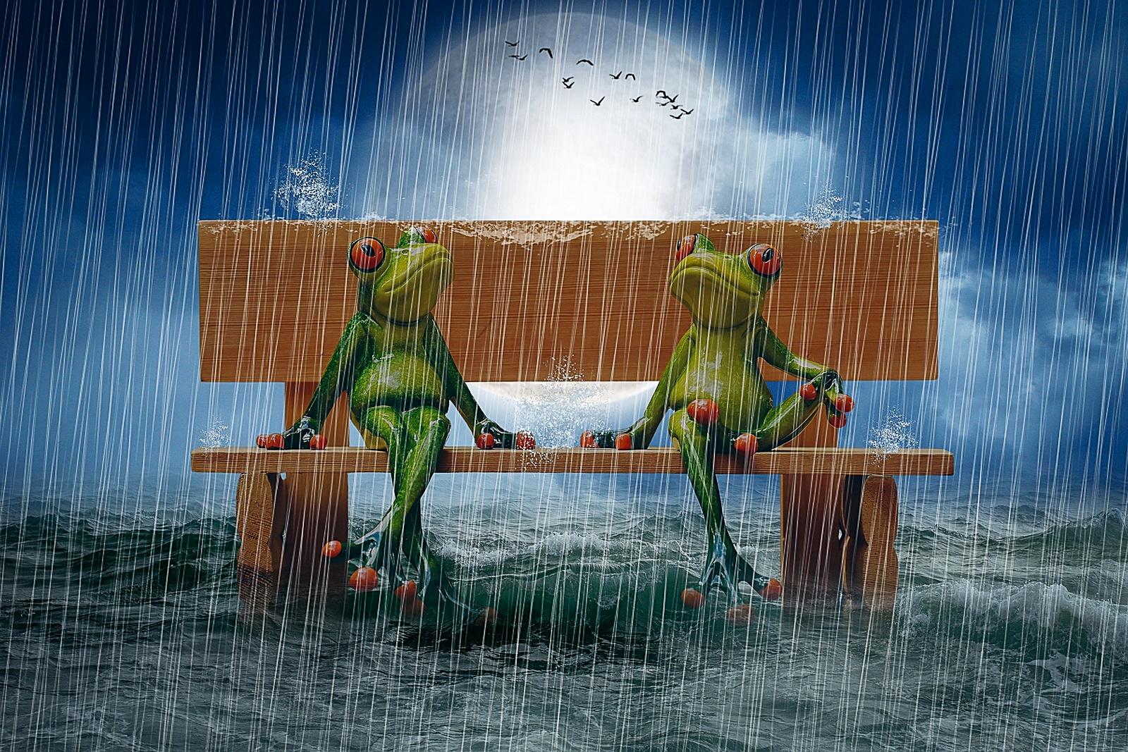 빗속의 개구리