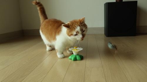 고양이사냥