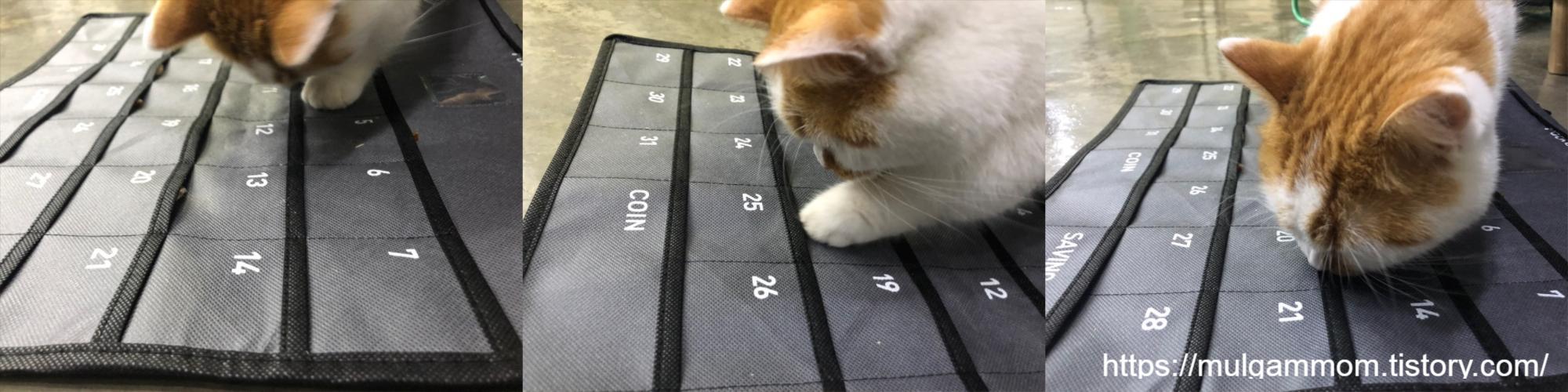 고양이노즈워크