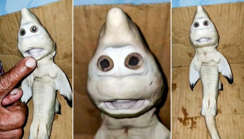 인도네시아에서 '사람 얼굴' 꼭 닮은 새끼 상어 발견
