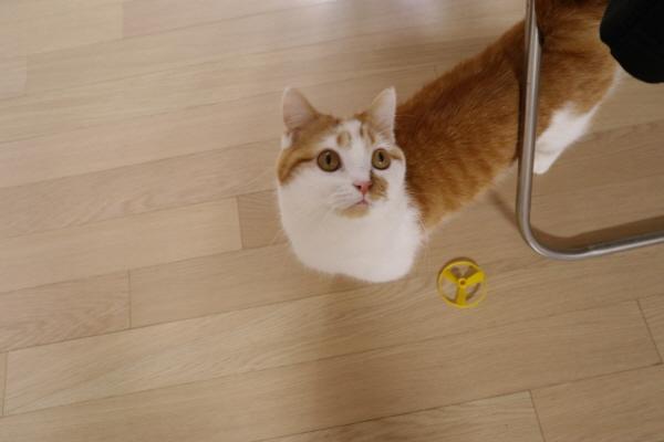 고양이다이어트