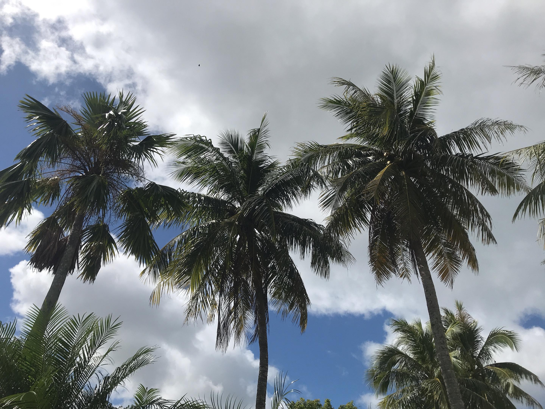 괌 여행의 기억