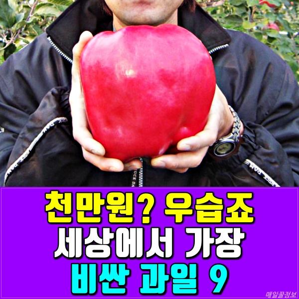 비싼 과일, 사과, 매일꿀정보