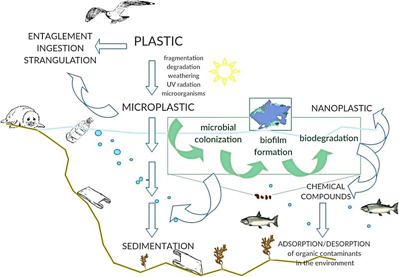 먹이사슬을 통한 미세 플라스틱 이동 과정