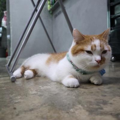 고양이우울증