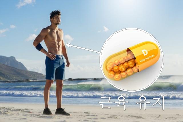 비타민D 효능, 근육량 늘리는 방법, 근육 부자, 근감소증 좋은 음식 운동, 건강 팁줌 매일꿀정보