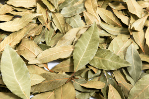 월계수잎효능5
