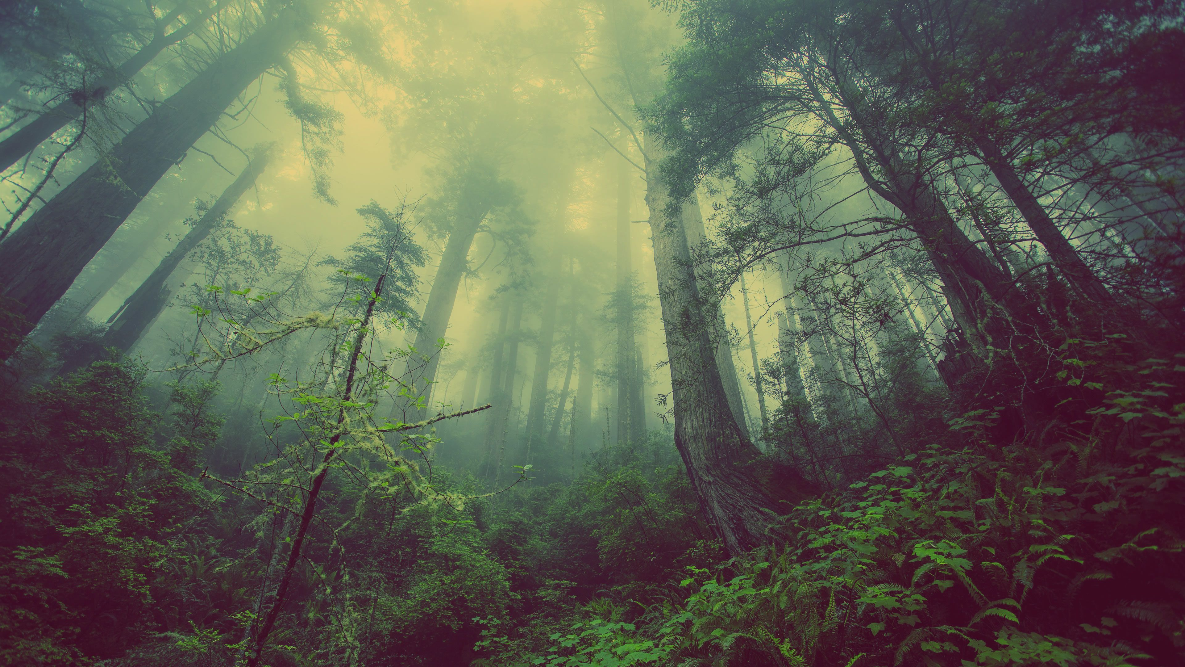 earth - forest