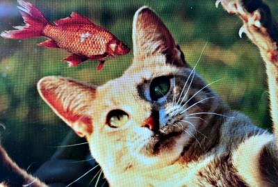 고양이날생선
