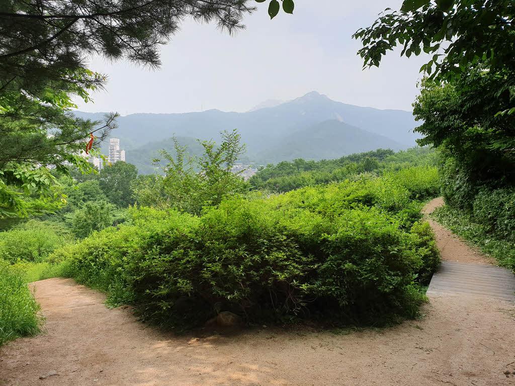 서울둘레길 1코스 철쭉동산 갈림길