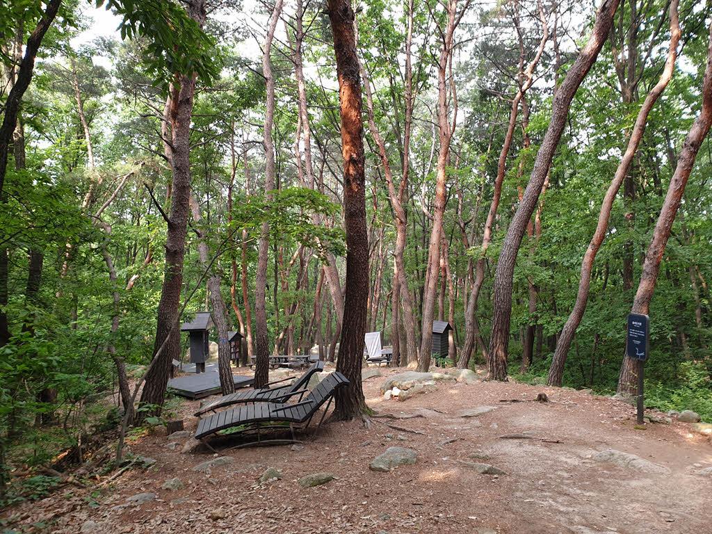 서울둘레길 1코스 전나무 숲