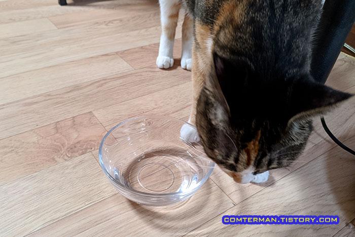 브리타 정수기물 고양이 식수