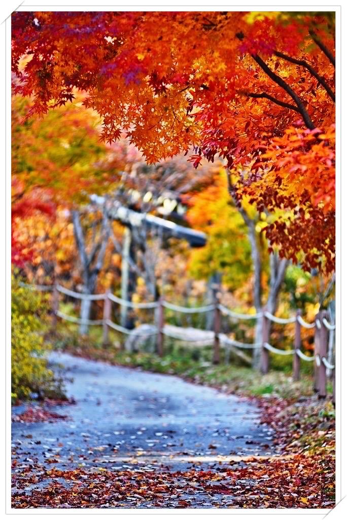 [想] 분분한 낙화, 절절한 낙엽