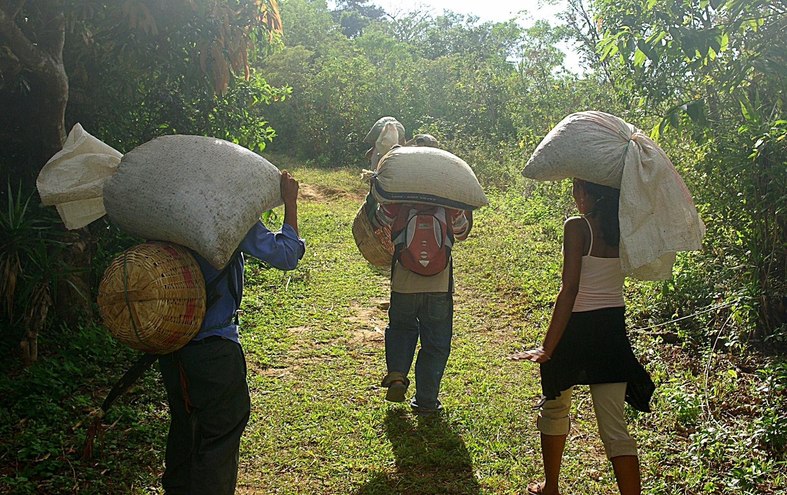 엘살바도르의 공정무역 커피 생산자들