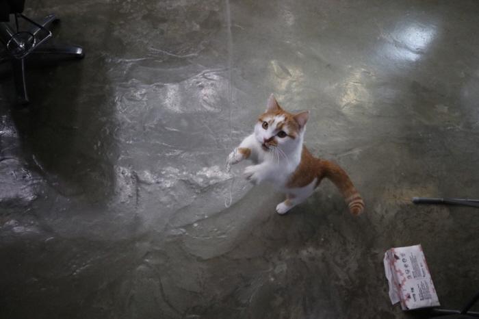 고양이셀프장난감