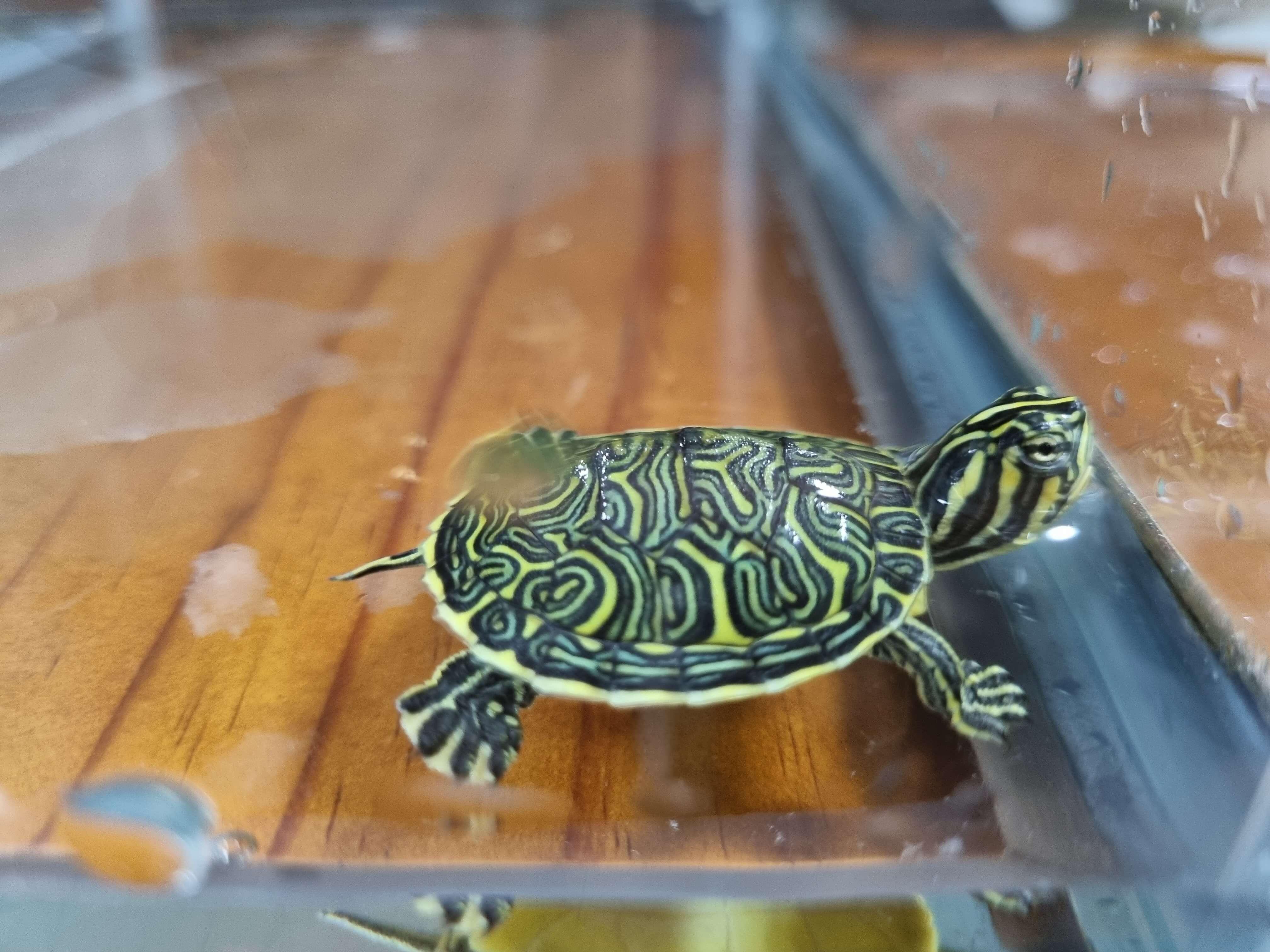 마트-거북이