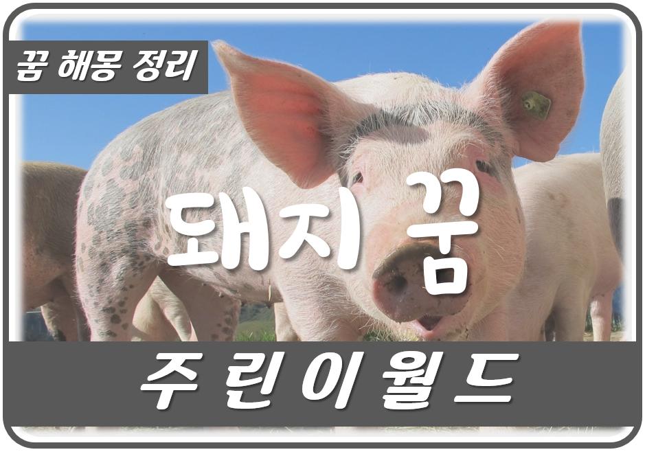 돼지 꿈에 대한 해몽