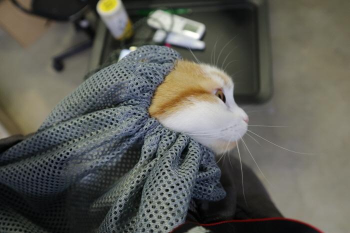 고양이산책가방