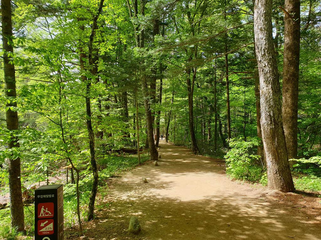 오대산 월정사 전나무숲길은 무장애길이다