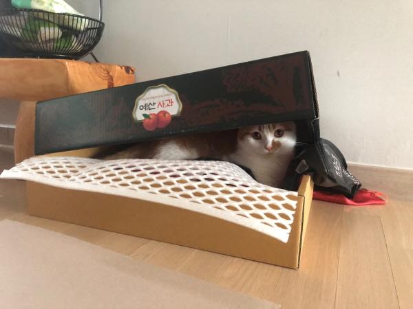 고양이박스