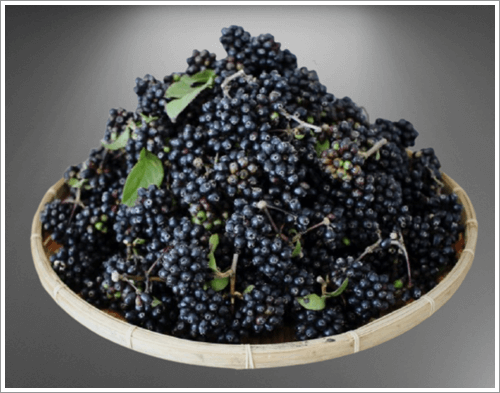가시오가피 열매