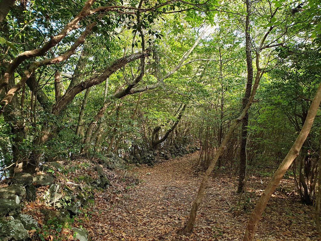 머체왓 숲길