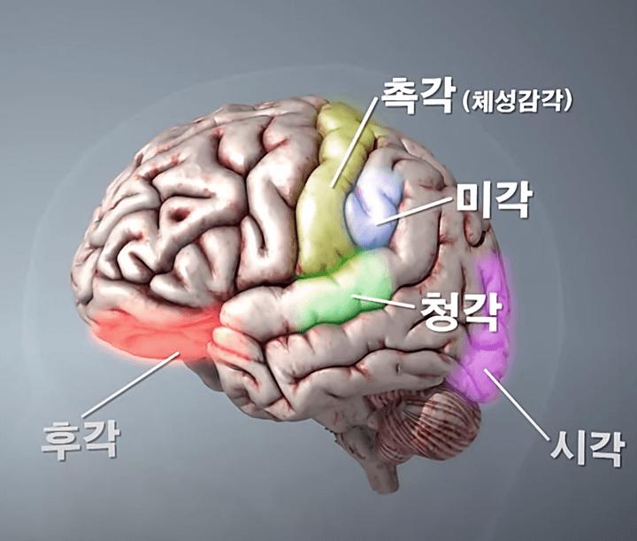 뇌구조-역할