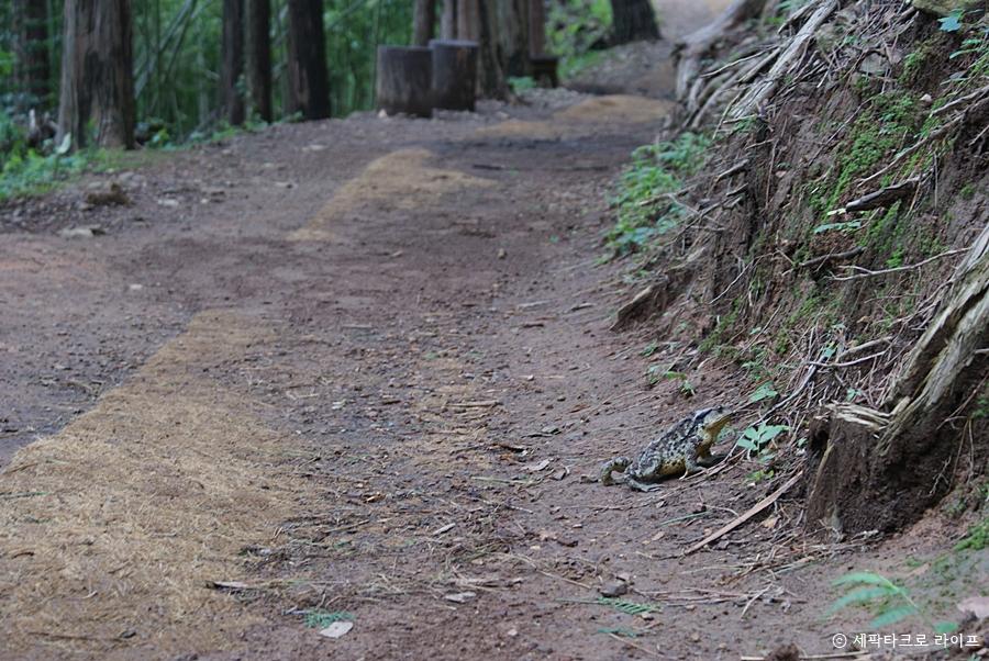 아홉산숲_두꺼비