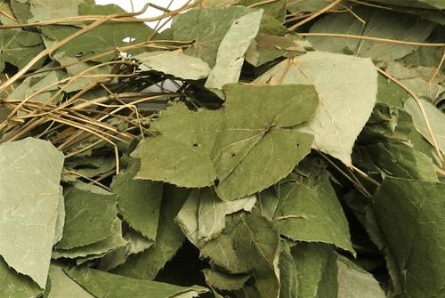 삼지구엽초효과1